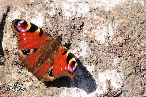 2012-03-05-Aglais_io_Monterrei